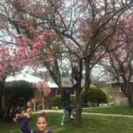lily, hope, and julia in tree